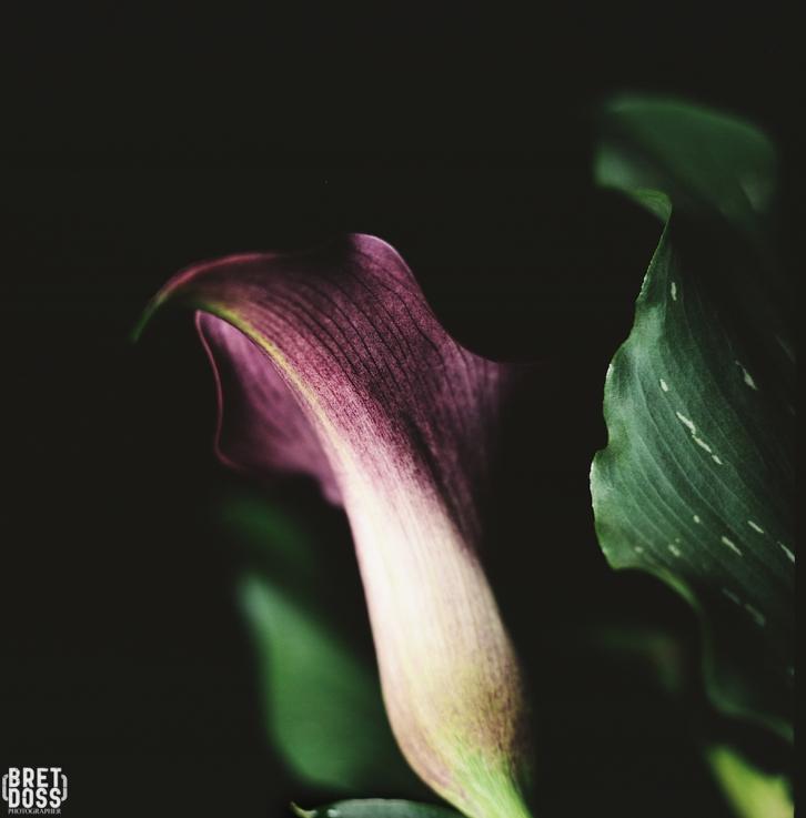 P52 Film 24 Frames in May © Bret Doss 2015 005