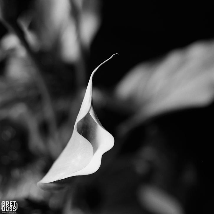 P52 Film 24 Frames in May © Bret Doss 2015 015