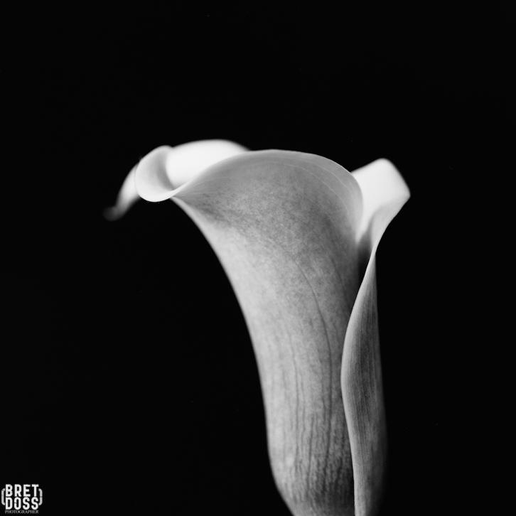 P52 Film 24 Frames in May © Bret Doss 2015 017