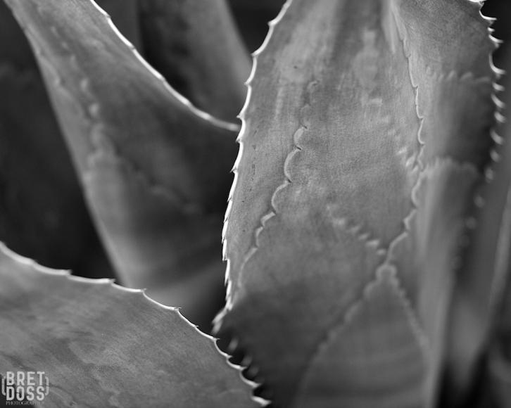 Botanical Garden Arizona ©Bret Doss 2015 18