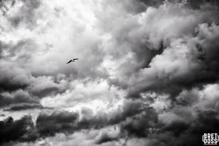 Clouds & Gulls © Bret Doss 2015 002