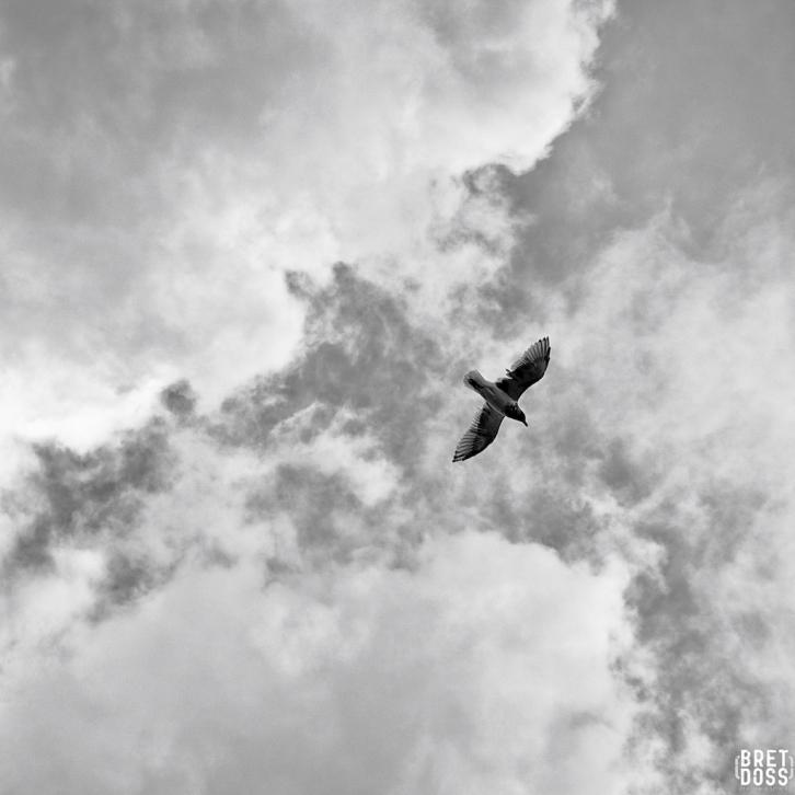 Clouds & Gulls © Bret Doss 2015 004