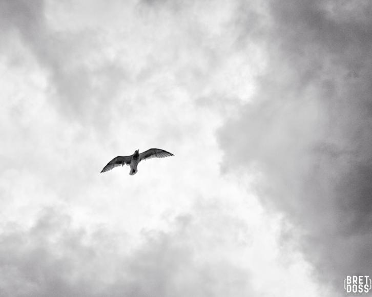 Clouds & Gulls © Bret Doss 2015 005