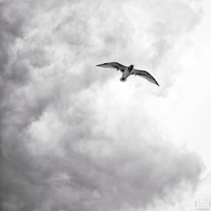 Clouds & Gulls © Bret Doss 2015 006