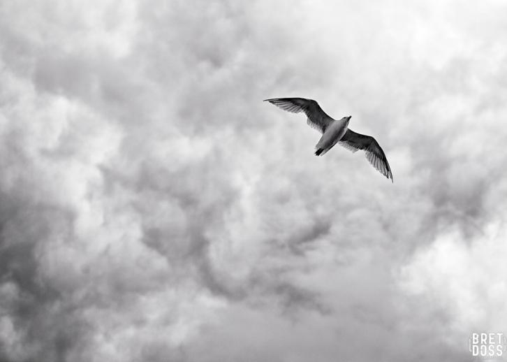 Clouds & Gulls © Bret Doss 2015 007