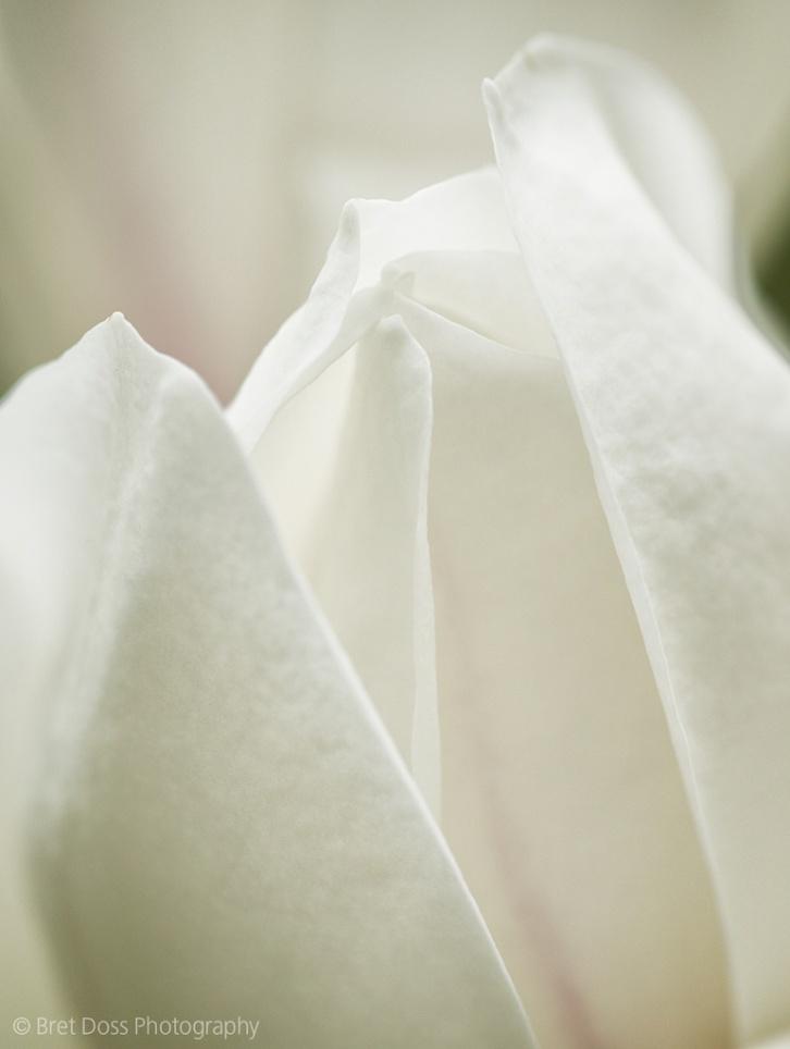 webct-1k-magnolia-at-arboretum-bret-doss-2013-04